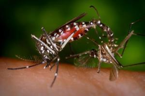 DIY yard mosquito control