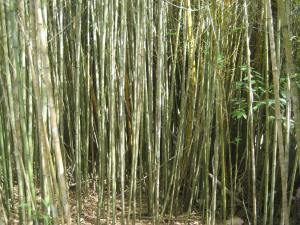 pros and cons of running bamboo