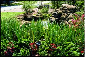 green environment health benefits