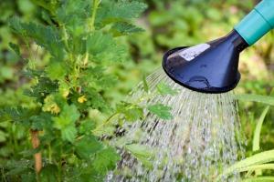 common gardening myths