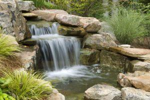 waterfall algae