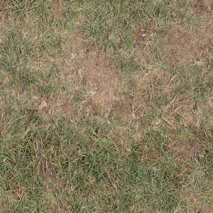 preventing brown lawn spots